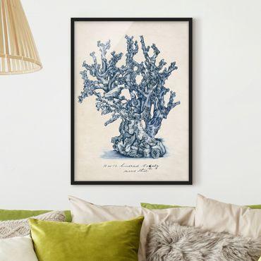 Poster con cornice - Sea Coralli Study II - Verticale 4:3