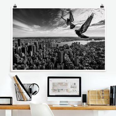 Poster - Piccioni sul Empire State Building - Orizzontale 2:3