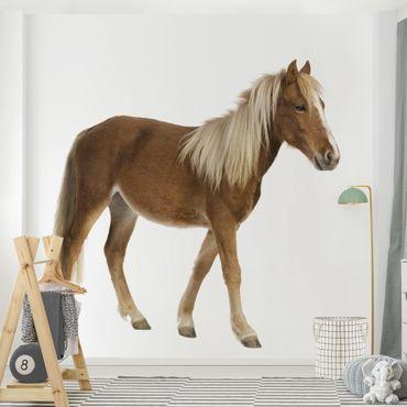 Carta da parati adesiva - pony- Formato quadrato