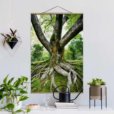 Foto su tessuto da parete con bastone - vecchio albero - Verticale 3:2