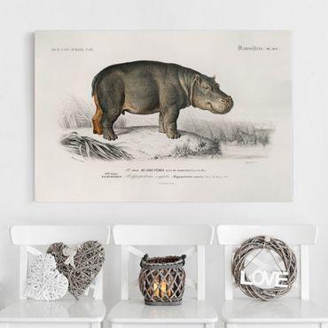 Stampa su tela - Vintage Consiglio Hippo - Orizzontale 2:3