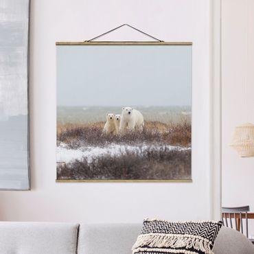 Foto su tessuto da parete con bastone - Orso polare e suoi cuccioli - Quadrato 1:1