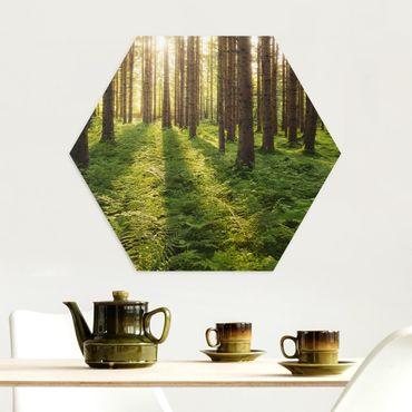 Esagono in Alu-dibond - Raggi di Sun nel verde della foresta