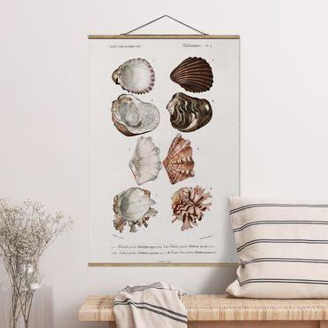 Foto su tessuto da parete con bastone - Consiglio Vintage otto conchiglie Rose Crema - Verticale 3:2