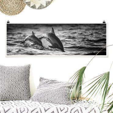 Poster - Due delfini che saltano - Panorama formato orizzontale