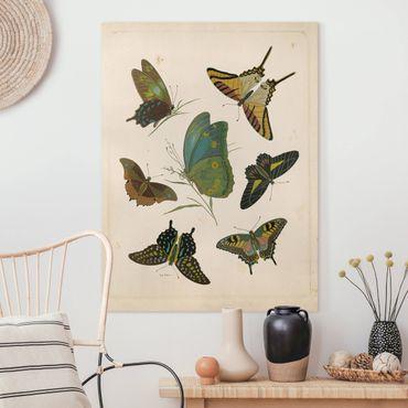 Stampa su tela - Illustrazione Vintage farfalle esotiche - Verticale 4:3