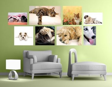 Adesivo murale Cats and Dogs Sticker Set