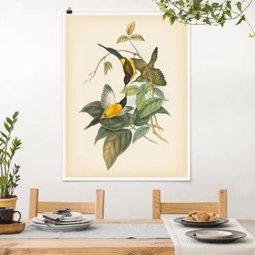 Poster - Illustrazione Vintage Tropical Birds IV - Verticale 4:3