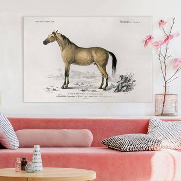 Stampa su tela - Consiglio di cavallo Vintage - Orizzontale 2:3
