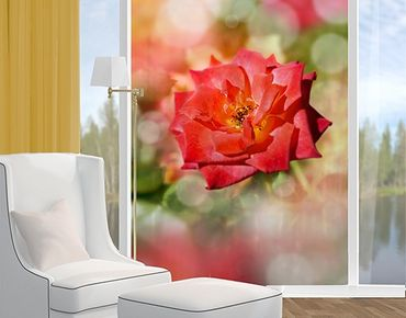Decorazione per finestre no.YK19 Shining Rose