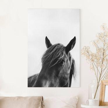 Stampa su tela - Cavallo curioso - Verticale 3:2