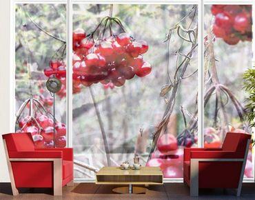 XXL Pellicola per vetri - no.CA42 Forest Fruits