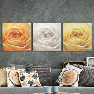 Stampa su tela 3 parti - Trio Of Pure Roses - Quadrato 1:1