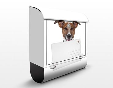 Cassetta postale Dog With Letter 39x46x13cm