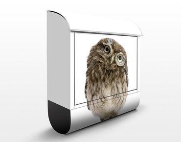 Cassetta postale Curious Owl 39x46x13cm