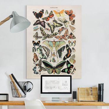 Stampa su tela - Vintage Consiglio farfalle e falene - Verticale 4:3