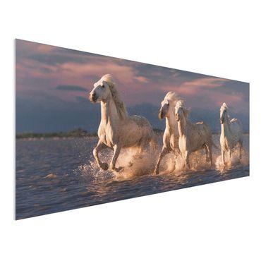 Quadro in forex - Cavalli selvaggi in Kamargue - Panoramico