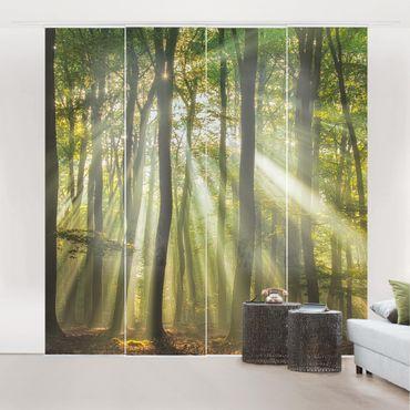 Tende scorrevoli set - Sunny Day In The Forest