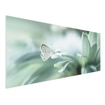Quadro in forex - Farfalla E Gocce di rugiada In Pastel Verde - Panoramico