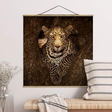Foto su tessuto da parete con bastone - Leopard riposo su un albero - Quadrato 1:1