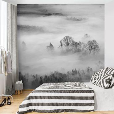 Carta da parati adesiva foresta - Nebbia all'alba - Formato quadrato