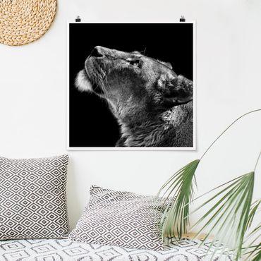 Poster - Ritratto di una leonessa - Quadrato 1:1