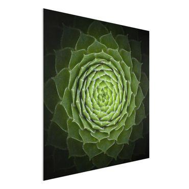 Quadro in forex - Mandala Succulente - Quadrato 1:1