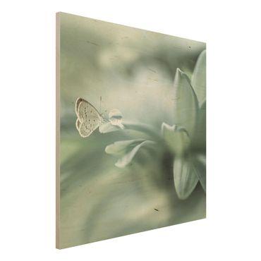 Quadro in legno - Farfalla E Gocce di rugiada In Pastel Verde - Quadrato 1:1