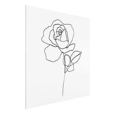 Stampa su Forex - Line Art Rosa Nero Bianco - Quadrato 1:1