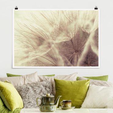 Poster - Dettagliata Dandelion Macro Shot con sfocatura effetto vintage - Orizzontale 2:3