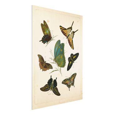 Stampa su Forex - Illustrazione Vintage farfalle esotiche - Verticale 4:3