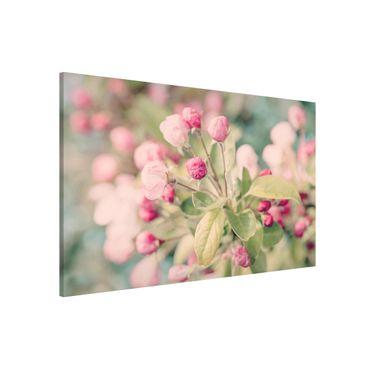 Lavagna magnetica - Apple Blossom rosa bokeh - Formato orizzontale 3:2