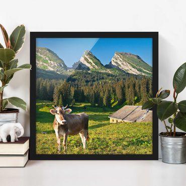 Poster con cornice - Swiss Alpine Meadow With Cow - Quadrato 1:1