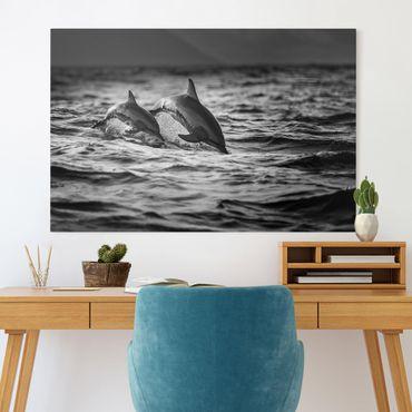 Stampa su tela - Due delfini che saltano - Orizzontale 3:2