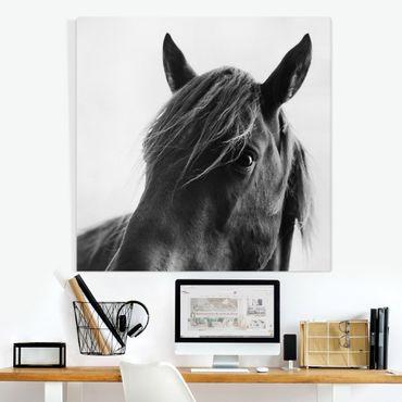 Stampa su tela - Cavallo curioso - Quadrato 1:1