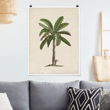 Poster - Britannico Palms II - Verticale 4:3