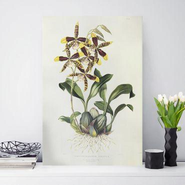 Stampa su tela - Maxim Gauci - orchidea II - Verticale 3:2