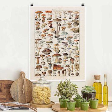 Poster - Funghi del Consiglio d'epoca - Verticale 4:3