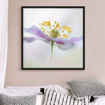 Poster con cornice - Windflower In White - Quadrato 1:1