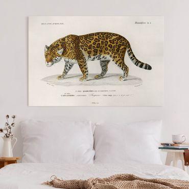 Stampa su tela - Consiglio Jaguar d'epoca - Orizzontale 2:3
