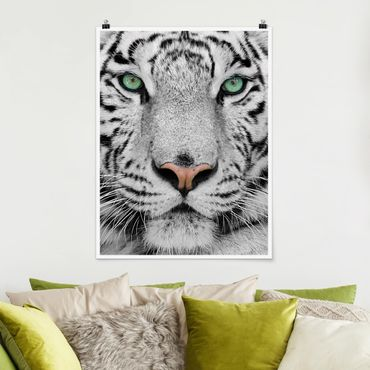 Poster - white Tiger - Verticale 4:3