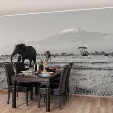 Carta da parati - Elephants in front of the Kilimanjaro in Kenya II