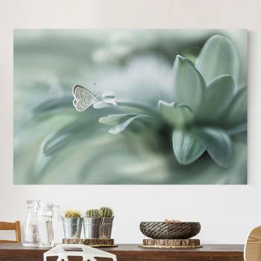 Stampa su tela - Farfalla E Gocce di rugiada In Pastel Verde - Orizzontale 3:2