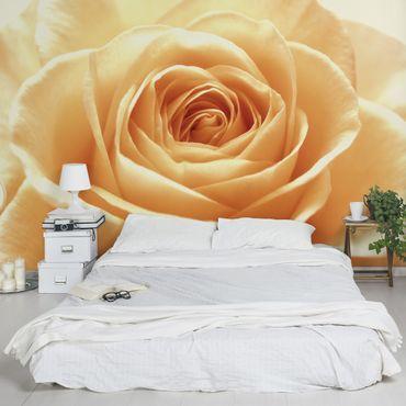 Carta da parati - Sweet Orange Rose