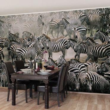 Carta da parati - Zebra herd