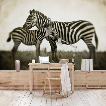 Carta da parati - Zebra Pair
