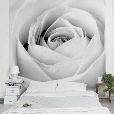 Carta da parati - Close Up Rose
