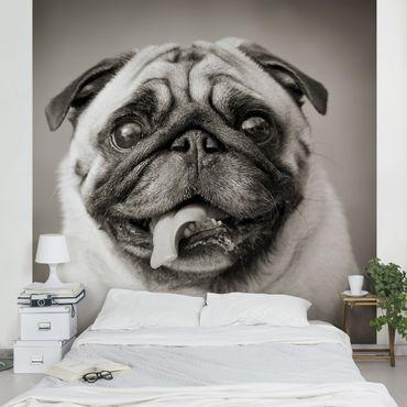 Carta da parati - Funny Pug