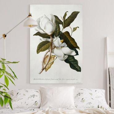 Quadri su tela - Georg Dionysius Ehret - Magnolia