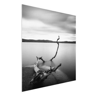 Quadro in forex - Tramonto In Bianco e nero Dal Lago - Quadrato 1:1